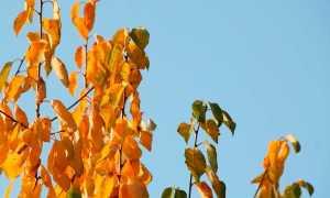 Сочинение на тему Поздняя осень (4, 5, 6 класс)