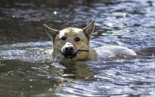 Собака Травка из рассказа Кладовая солнца Пришвина характеристика и образ