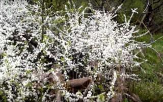 Сочинение на тему Весна приходит в мой город