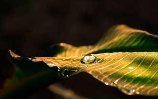 Сочинение Путешествие капельки воды в природе 6 класс по географии