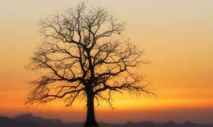 Сочинение Почему нужно уважать старших? 11 класс ЕГЭ