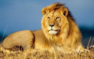 Какие животные живут в африке?