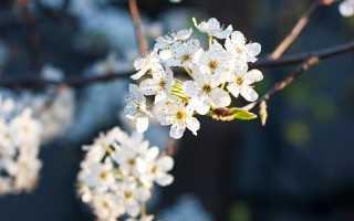Антоновские яблоки – краткое содержание рассказа Бунина