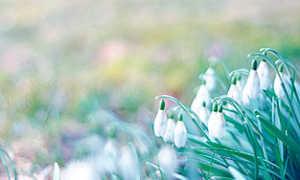Сочинение на тему Весенняя природа (описание)