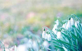 Сочинение на тему Погода весной