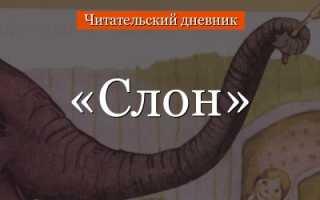 Слон – краткое содержание рассказа Куприна