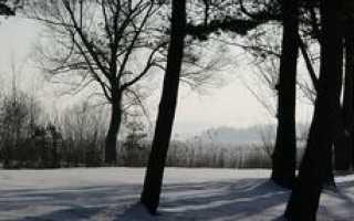 Анализ стихотворения Сыплет черемуха снегом Есенина