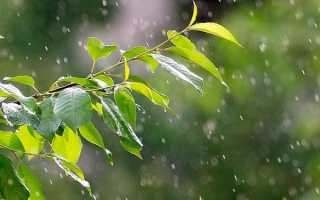 Сочинение на тему Грибной дождик 3 класс