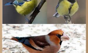 Сочинение на тему Птицы зимой