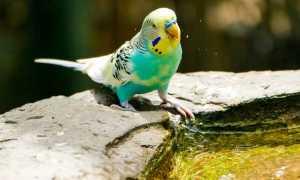 Сочинение на тему мой любимый попугай