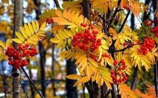 Сочинение Описание природы осенью