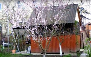 Сочинения на тему Весна (более 15 штук)