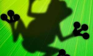 Лягушонок – краткое содержание рассказа Эдгара По