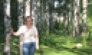 Сочинение описание по фотографии (картине) Гиппенрейтера Стволы берез (описание)